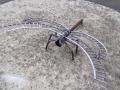 Srot Art 0007 - Draci moucha